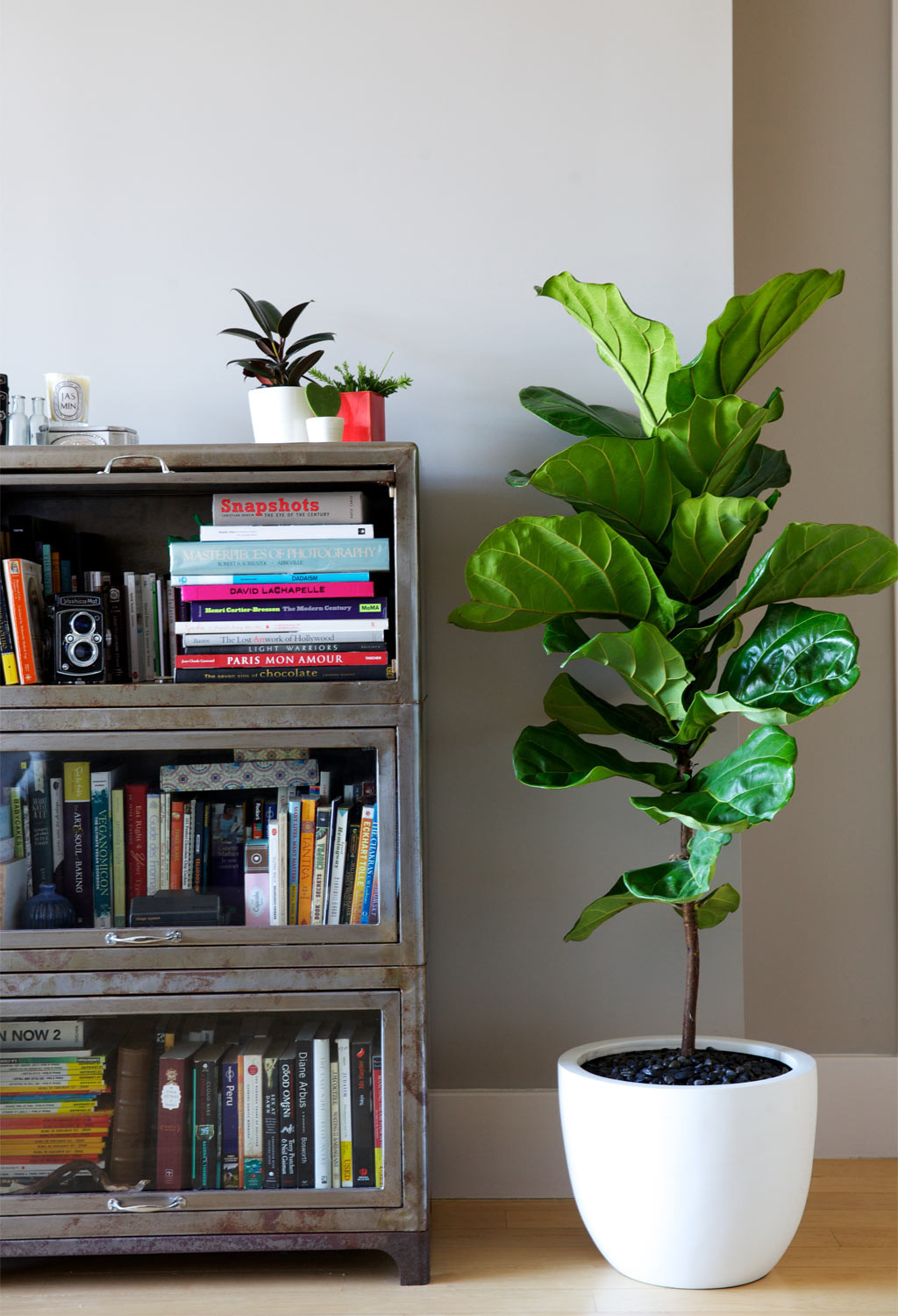 Interior Decoration Choosing The Right Indoor Plants Hamstech Blog