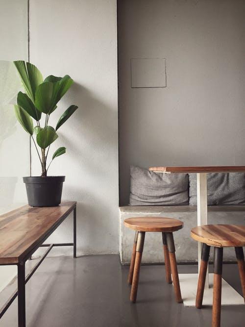 Interior Design Indoor Plants